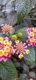 Blooming Colors stock photography
