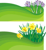 Blooming daffodil and crocus - the beginning of sp Stock Image