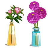 Blooming dahlia and non-blooming flower in vase. Pink blooming dahlia and non-blooming flower in glass vase. Vector Illustration in cartoon style isolated on vector illustration