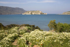 Blooming daisy in front of Spinalonga Island Stock Images