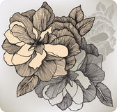 Blooming decorative rose, hand-drawing. Vector illustration. Royalty Free Stock Photos