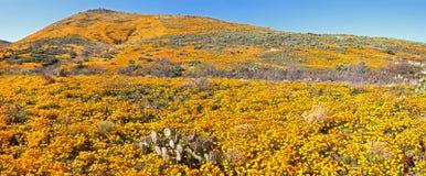 Blooming Desert Royalty Free Stock Image