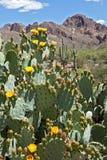 Blooming Desert Royalty Free Stock Photos