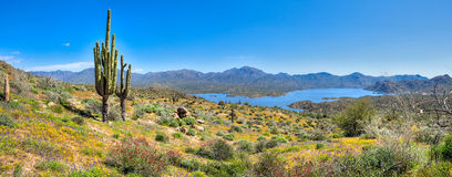 Blooming Desert Stock Images
