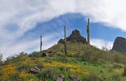 Blooming Desert stock photography