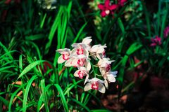 Blooming elegant pink orchids in blossom garden. Spring flowers on blurred floral background. Stock Image
