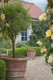 Blooming English cottage garden. English cottage garden patio Royalty Free Stock Image