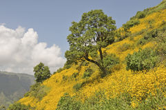 Blooming Ethiopia royalty free stock image