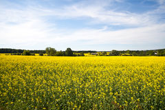 Blooming farmers crops Royalty Free Stock Photo