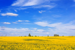 Blooming field and beautiful sky Stock Images