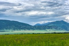 Blooming field and green mountains under a stormy sky. Different colors of flowers and herbs shimmer in the sun. Mountain Altai in the summer Royalty Free Stock Photography