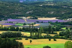 Blooming field of Lavender, Provence-Alpes-Cote d'Azur, Southern Stock Photo