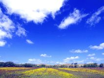 Blooming fields Royalty Free Stock Photo