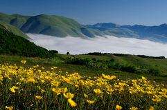 Blooming fields of Castelluccio di Norcia. Flowering high mountain national park mountains sibillini - Castelluccio di Norcia Stock Photos