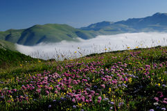 Blooming fields of Castelluccio di Norcia Royalty Free Stock Image