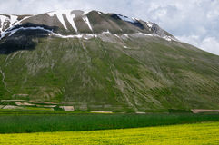 Blooming fields of Castelluccio di Norcia Stock Photography