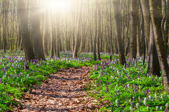 Blooming fields of flowers in a spring forest Stock Photos