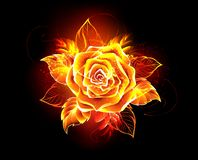 Blooming fire rose  Flame rose. Blooming rose from fire and flame on black background. Fire rose Stock Images