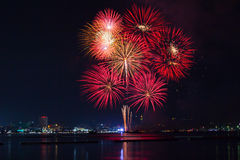 Blooming firework mixed color of celebration night Royalty Free Stock Photography