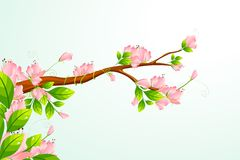 Blooming Flower Royalty Free Stock Images