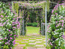 Blooming flower arch Stock Images