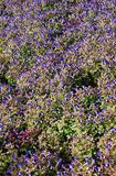 Blooming flower bed from above Stock Image