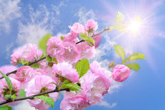 Blooming flower Royalty Free Stock Photos