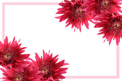 Blooming flower frame Stock Images