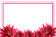 Blooming flower frame. Beautiful photo frame with blooming flowers Royalty Free Stock Images
