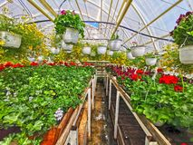 Blooming flower in greenhouse stock image