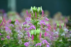 Blooming Flower stock image