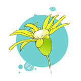 Blooming flower illustration royalty free stock photography