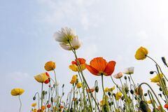 Blooming Flower In Sunlight Royalty Free Stock Photography