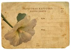 Blooming flower of mallow. Old postcard Royalty Free Stock Images
