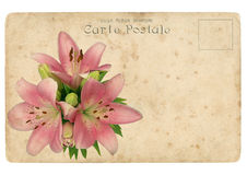 Blooming flower of pink lily. Old postcard Royalty Free Stock Photos