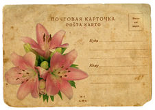 Blooming flower of pink lily. Old postcard Royalty Free Stock Photography