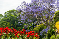 Blooming Flower in Royal Botanic Gardens in Sydney, Australia. Blooming Flower in Royal Botanic Gardens in Sydney stock image