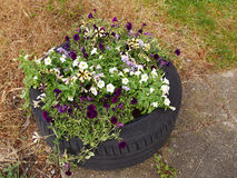 Blooming flowerbed inside a tire Royalty Free Stock Image