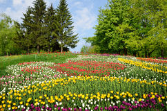 Blooming flowerbed in the spring park Royalty Free Stock Images