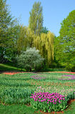Blooming flowerbed in the spring park Stock Photo