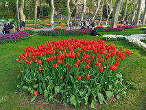 Blooming flowerbeds  and Alley of Gülhane Park. Stock Image