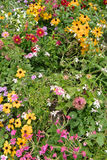 Blooming flowers. Patch of colorful blooming flowers outdoors Royalty Free Stock Photography