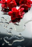 Blooming flowers. A picture of blooming red flowers Stock Photography