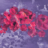 Blooming flowers background Royalty Free Stock Photo