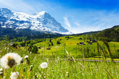 Blooming flowers with beautiful Swiss landscape Royalty Free Stock Images