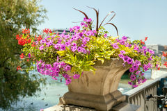 A blooming flowers on bridge banister in summer day Stock Images