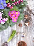 Blooming flowers and bulbs on table royalty free stock images