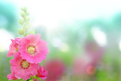 Blooming flowers Stock Photography