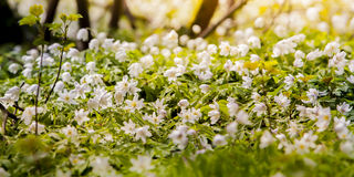 Blooming flowers Royalty Free Stock Photography