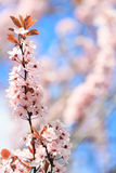 Blooming flowers. Floral background Royalty Free Stock Photos